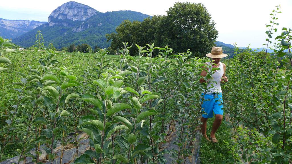 arbres-fruitiers-biologique-pepiniere