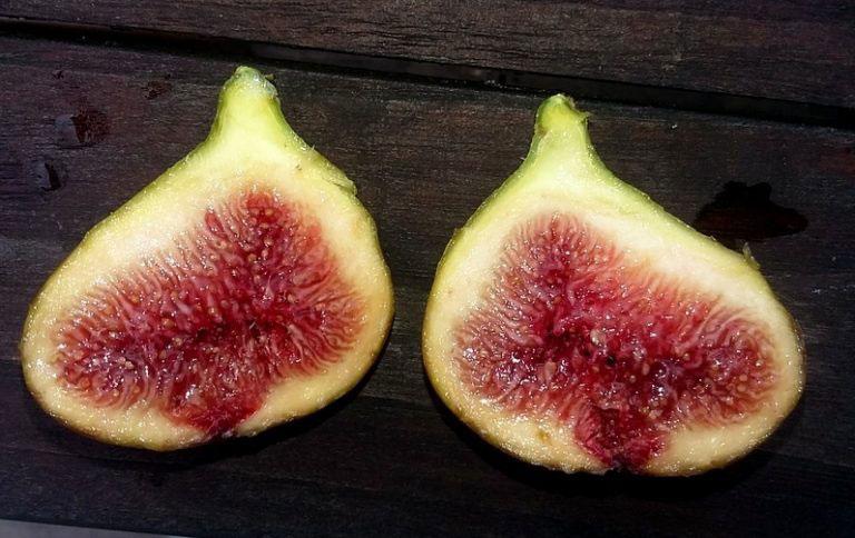 pepiniere-biologique-arbre-figue-doree-coupe