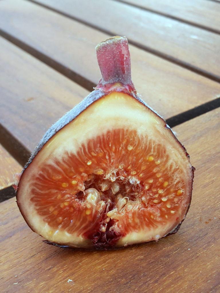 pepiniere-biologique-arbre-figue-pastilliere-coupe