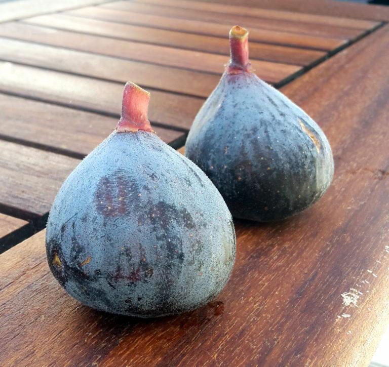 pepiniere-biologique-arbre-figue-pastilliere-fruit