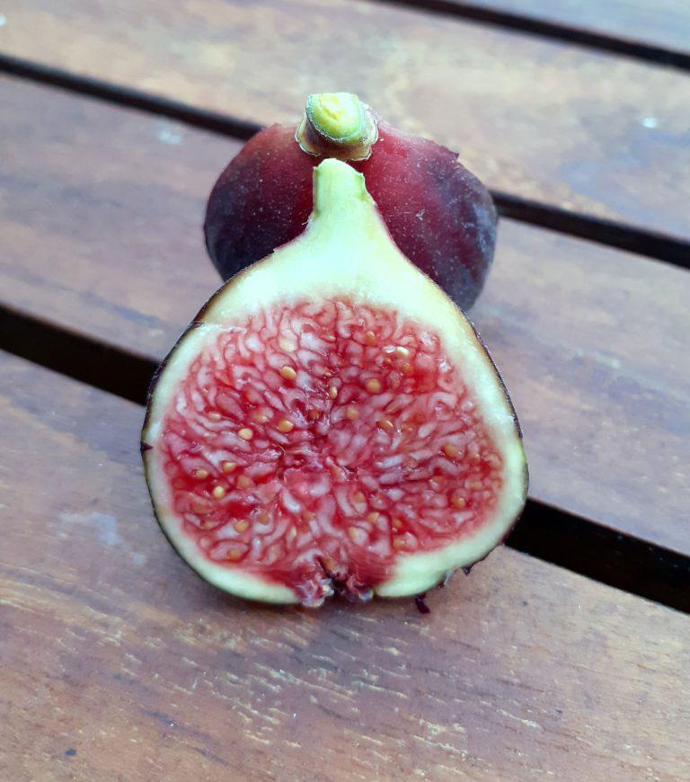 pepiniere-biologique-arbre-figue-ronde-de-bordeaux-coupe