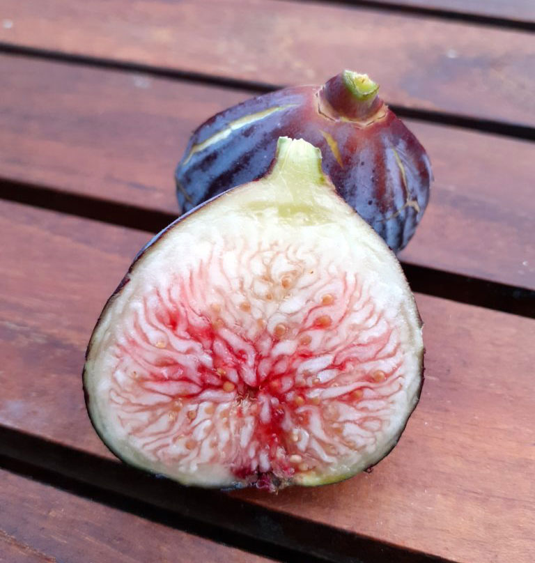 pepiniere-biologique-arbre-figue-sultane-coupe