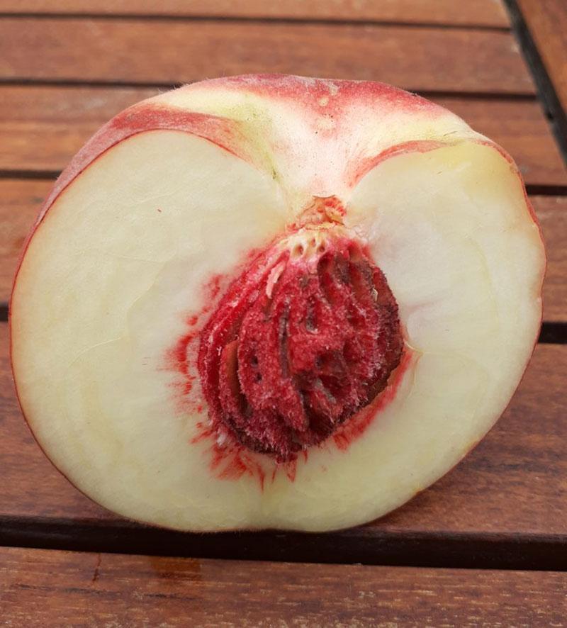 pepiniere-biologique-arbre-peche-benedicte-coupe