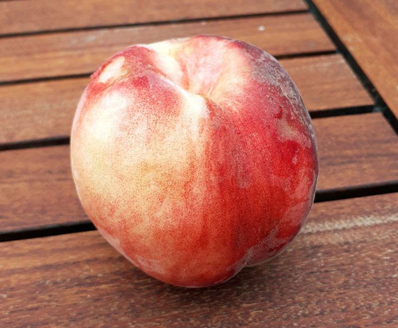 pepiniere-biologique-arbre-peche-benedicte-fruit