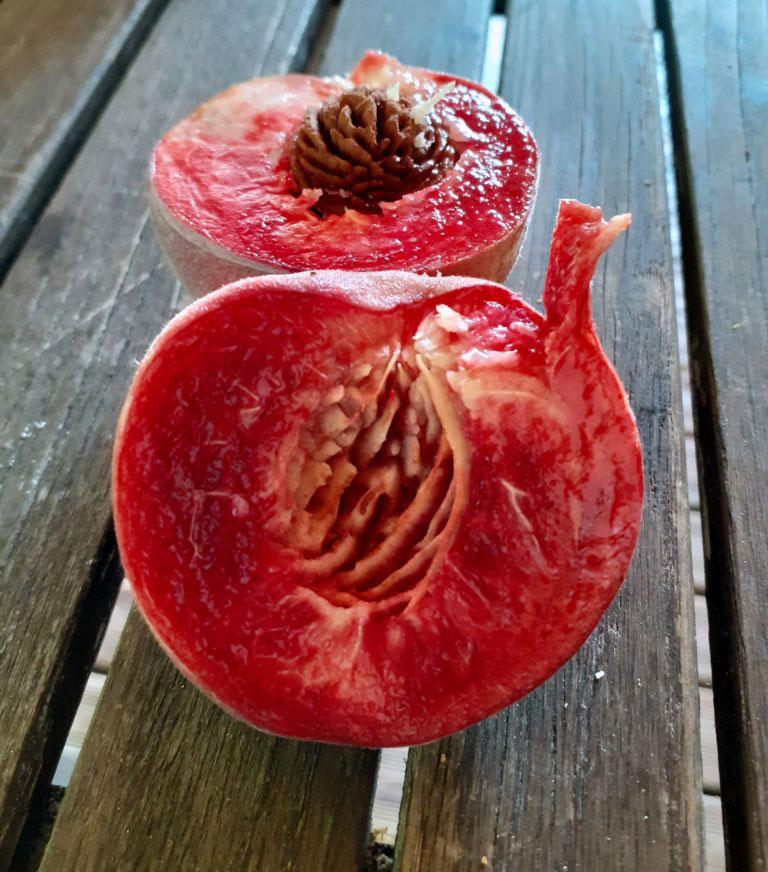 pepiniere-biologique-arbre-peche-magnard-coupe
