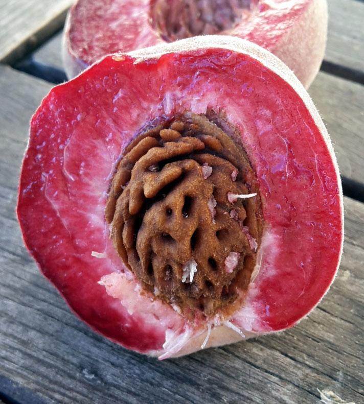 pepiniere-biologique-arbre-peche-tardif-de-chanas-coupe