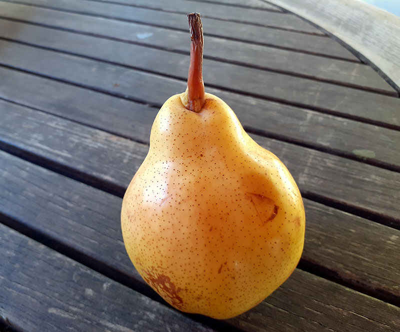 pepiniere-biologique-arbre-poire-williams-fruit