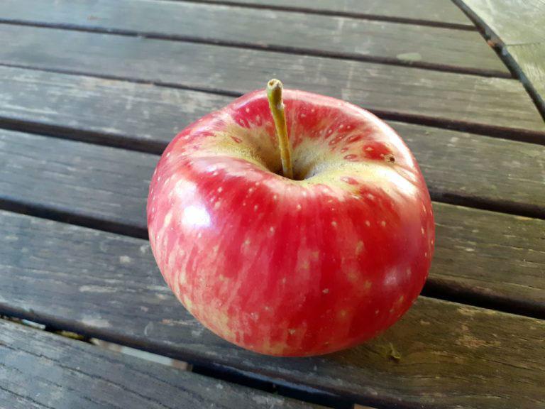 pepiniere-biologique-arbre-pomme-calville-precoce-fruit